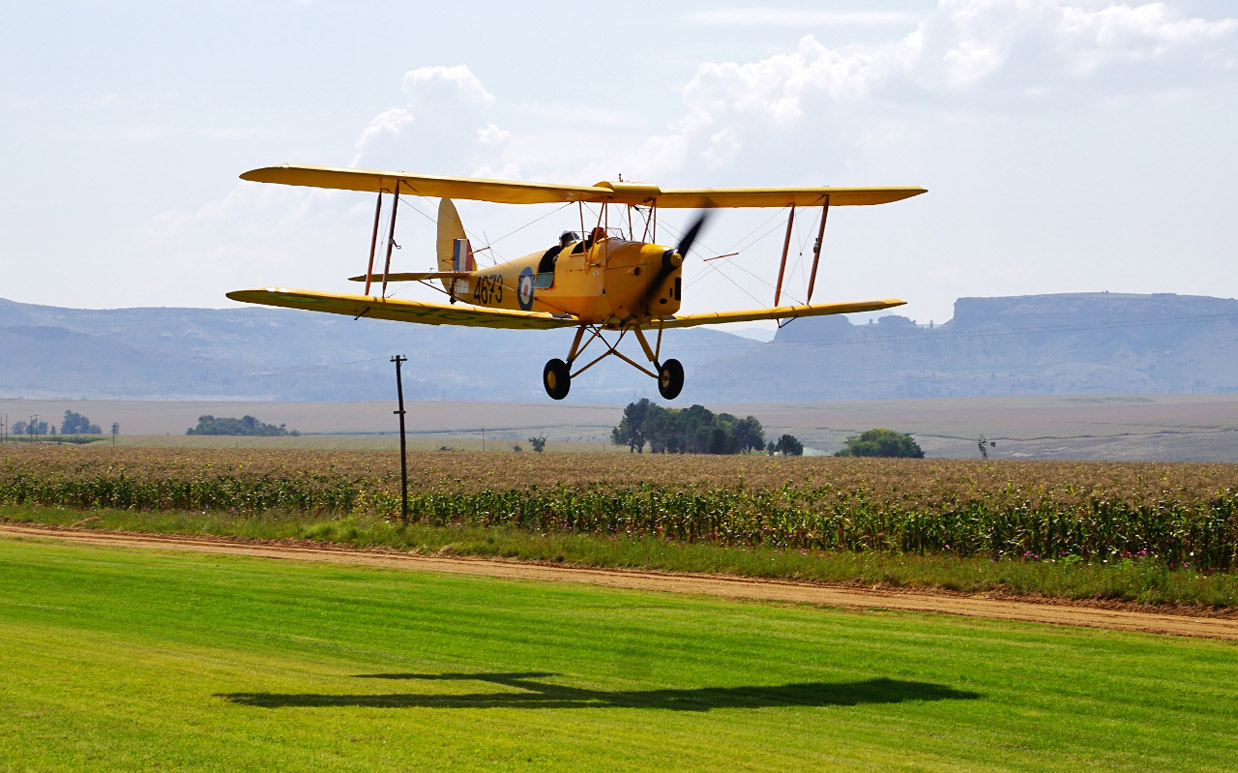 Tigermoth and its shadow