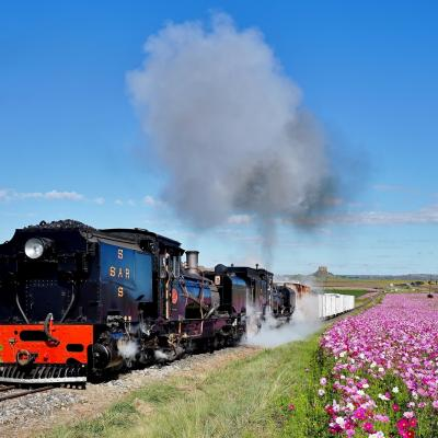 Blue Skies Cosmos Flowers And Trains